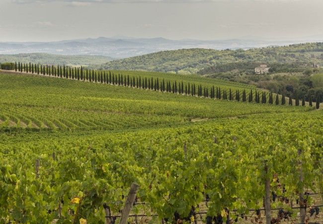 Explore the Chianti region