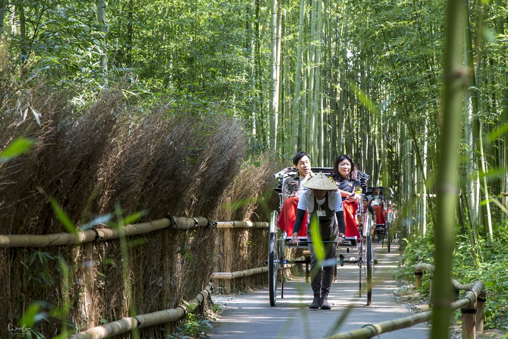Japan Kyoto Bamboo grove