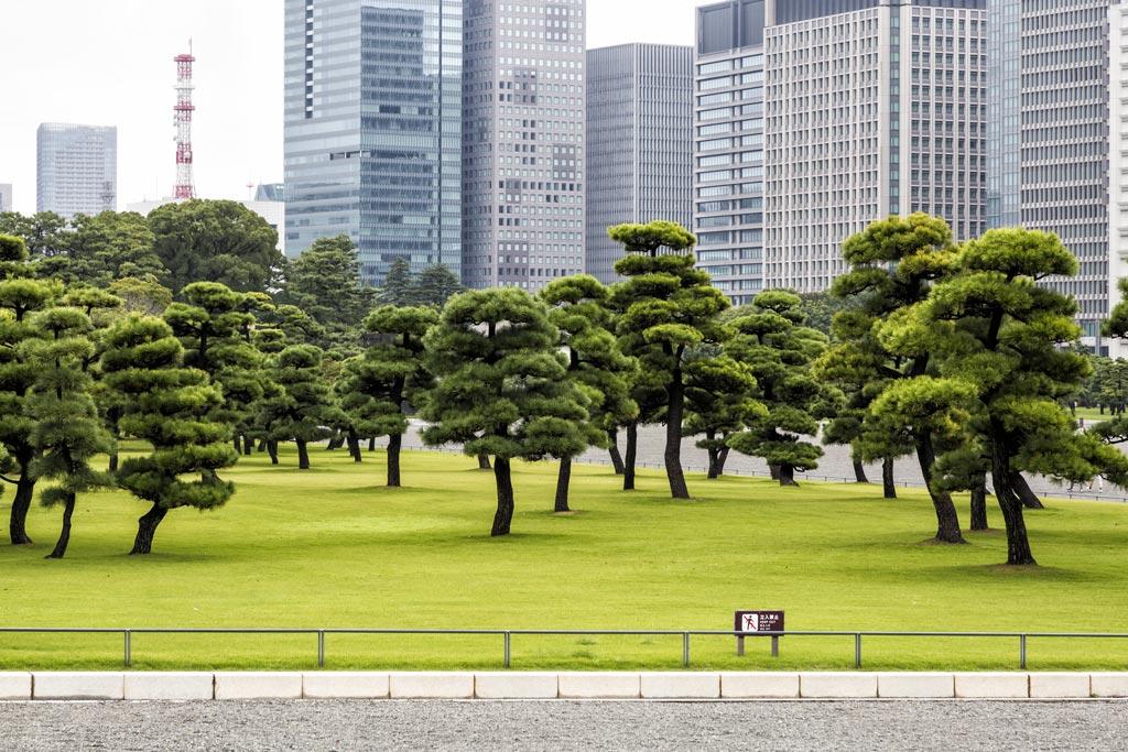 Japan Tokyo Royal Palace Garden