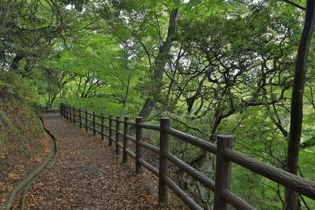 Nara Wakakusa trail