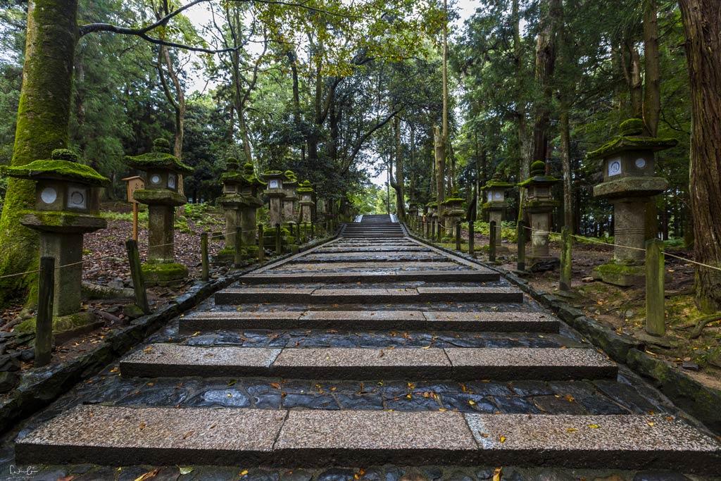 Nara woods