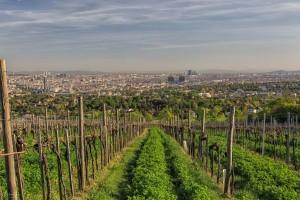 Vienna summer locations vineyards