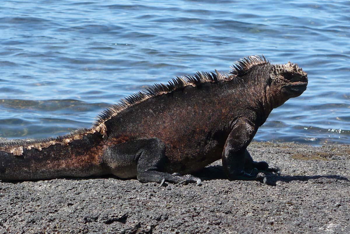 Ecuador and Galapagos photo tour