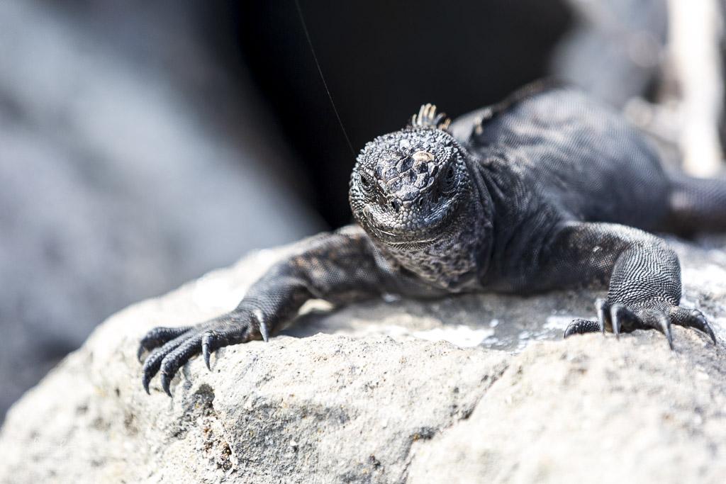 Ecuador itinerary Galapagos