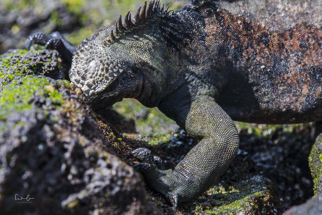 Ecuador Reisetipps Galapagos