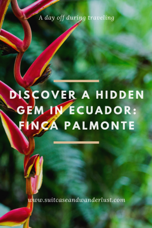 hidden paradise Finca Palmonte