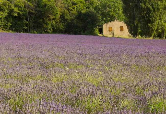 A Provence itinerary for 6 days: Highlights and some hidden gems