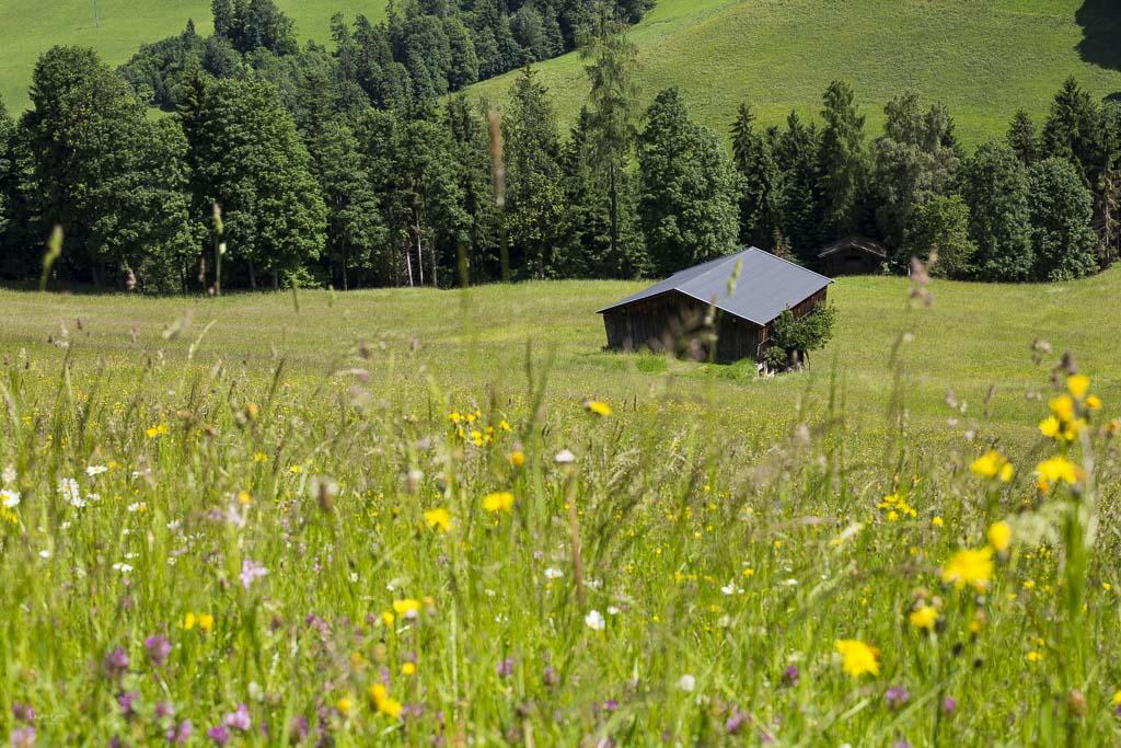 Alpbach Sommer