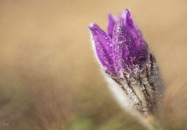 Blumen fotografieren. Mit wenigen Tricks zu Wow Fotos