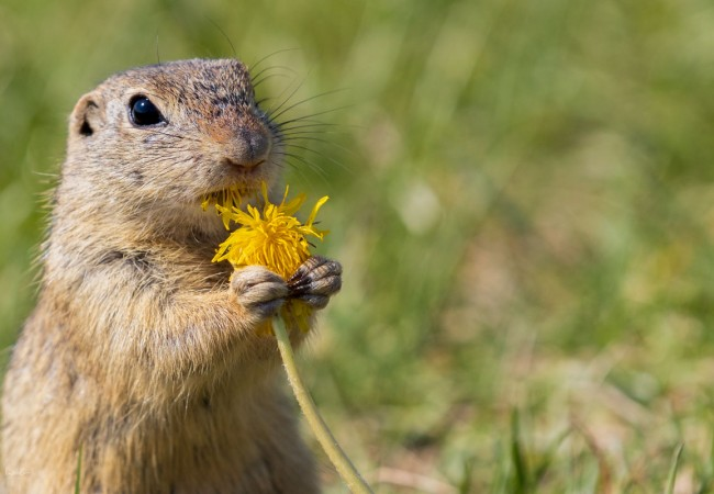 Tiere fotografieren – Die richtige Vorbereitung und Tipps für die Tierfotografie