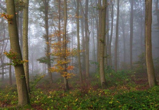 Waldfotografie: So gelingen deine Waldfotos